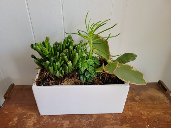 A mix of succulents are planted in a large, white, ceramic planter. They are various shade of green.