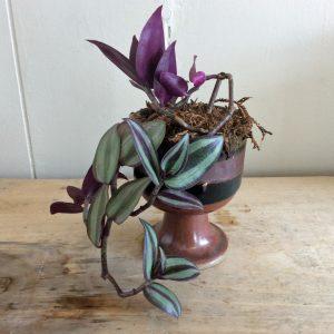 goblet plant