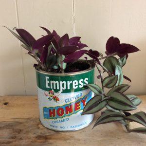 tin plant