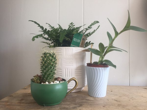 plant subscription scaled