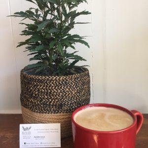 plant n coffee