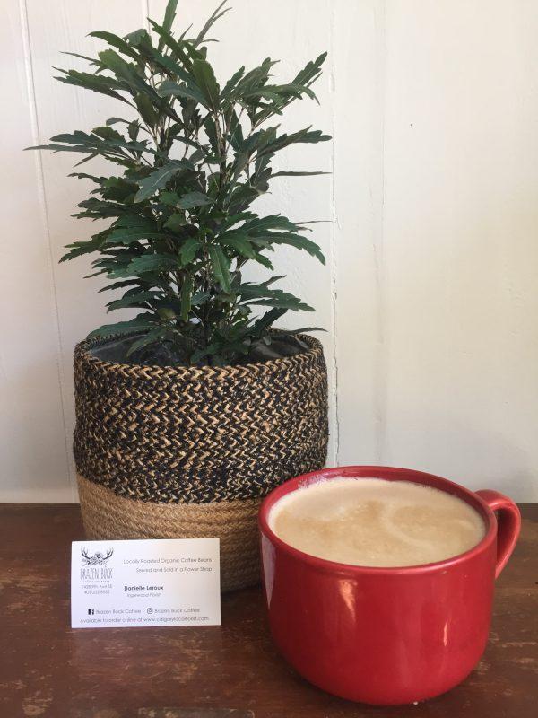 plant n coffee scaled